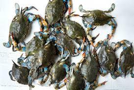 down the shore crab gravy is king taste