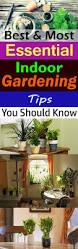 217 best indoor gardening images on pinterest indoor gardening