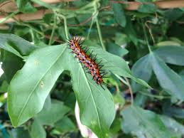 butterfly host plants now available at the arbor gate