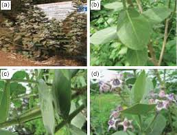 Plant Disease Journal - journal of vector borne diseases free full text articles from