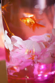 Table Decorations For Wedding by Best 25 Goldfish Centerpiece Ideas Only On Pinterest Fish