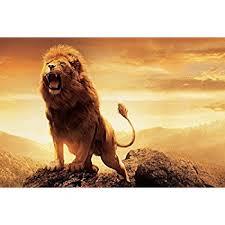 amazon aslan narnia lion canvas art prints 28