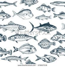 fish stock images royalty free images u0026 vectors shutterstock