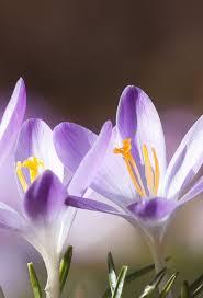 Beautiful Flower Pictures Best 25 Best Flowers Images Ideas On Pinterest Delphinium