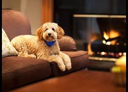 Washington traveling with pets images 129 best pet friendly hotels accommodations images jpg
