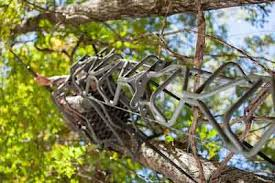 summit journal summit introduces the vine series of treestands