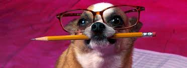 If A Dog Were Filling Out A Resume 100 If A Dog Was Filling Out A Resume Best 25 Cv Tips Ideas On