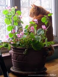 living green with pets bringing plants indoors the creative cat