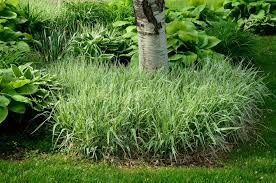 the best ornamental grasses for your yard