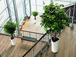 plants for office choosing the best indoor plants for your home or office interior