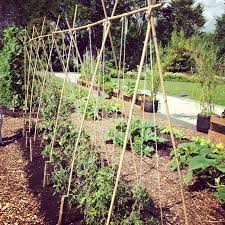 build grape trellis 5 variations on a string trellis for tomatoes bonnie plants