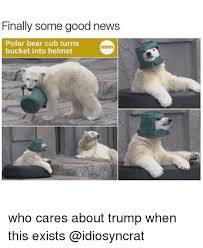 Polar Bear Meme - finally some good news polar bear cub turns bucket into helmet who