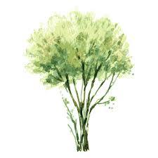 trees1000 easter eggs watercolor painting tree shrub illustration tree trees 1000 1000