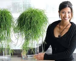 plantes bureau le rhipsalis une plante au pouvoir antistress chez soi une