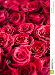 Bouquet Of Roses Free Picture Of Bouquet Of Flowers Bbcpersian7 Collections