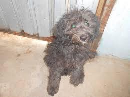 Cadela maltratada precisa de abrigo em Carapicuíba (SP) - ANDA ...