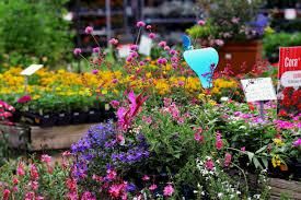 Heat Loving Plants by Container Gardening In The Summer Heat Esposito Garden Center Blog