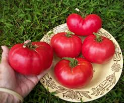 plants native to russia amishland ukrainian russian heirloom tomato seeds