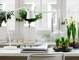 Home Interior Plants by Home Office With Desk Lamp And Houseplants Good Indoor Plants