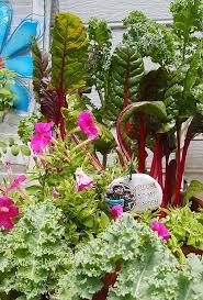 my container vegetable garden