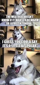 Bad Weather Meme - bad pun dog meme imgflip