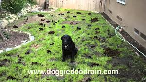 dog clean up solution youtube