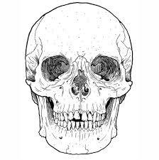Amazing Skull - amazing beautiful draw skull image 256415 on favim com