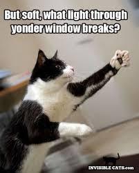 Good Luck Cat Meme - 389 best cats images on pinterest cute kittens funny kitties