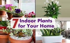 plants at home top 7 indoor plants for your home diy home life creative