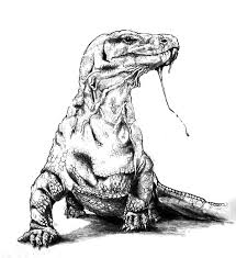 komodo dragon poisonous saliva coloring pages download u0026 print