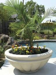 low bowl planter planters gardens and container plants