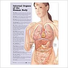 Online Human Body Buy Internal Organs Of The Human Body Anatomical Chart Book Online