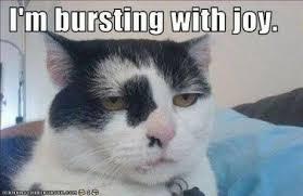 Sarcastic Cat Meme - sarcastic cat slaymyboredom