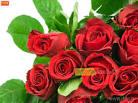 ดอกกุหลาบสีแดง no.4015 Wallpaper Download
