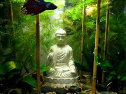zen buddha rock garden betta aquarium