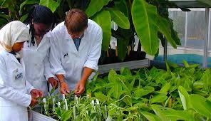 cura giardino chi cura un giardino 礙 uno scienziato e un libro ci spiega perch礬