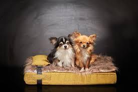 luxury bed for dog inuit yellow paris designer sabanah sabanah