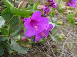 arizona native plants list programs natural resources native plant communities rare and