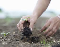 transplanting native plants how to harden off plants for transplanting