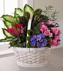 Online Flowers 25 Best Ideas About Send Flowers Online On Pinterest Chocolate