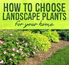Shrub Garden Ideas Best Small Landscape Bushes Plants For Garden Landscape Gardening