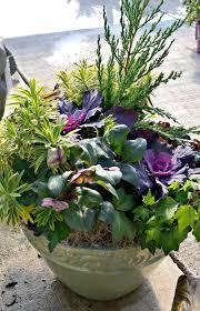 helleborus flowers that bloom in winter