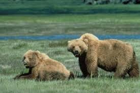 Are Bears Color Blind Be Bear Aware Us Forest Service