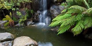 The Australian Botanic Garden Une News And Events Seminar The Australian National