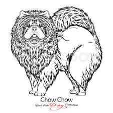 vector color sketch of a dog chow chow breed stock vector
