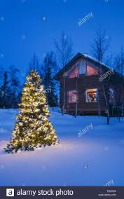 a tree with white lights outside a remote cabin twlight