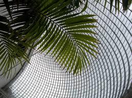 Bicton Park Botanical Gardens Bicton Park Botanical Gardens In Budleigh Salterton By J M