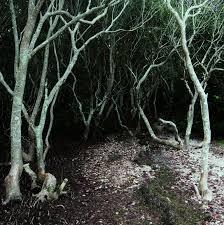 i a tim burton tree mangrove meanderings