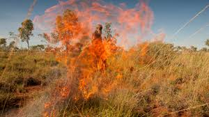 native australian desert plants populate or perish