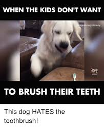 Brushing Teeth Meme - when the kids don t want nstagrammygoldenruby to brush their teeth